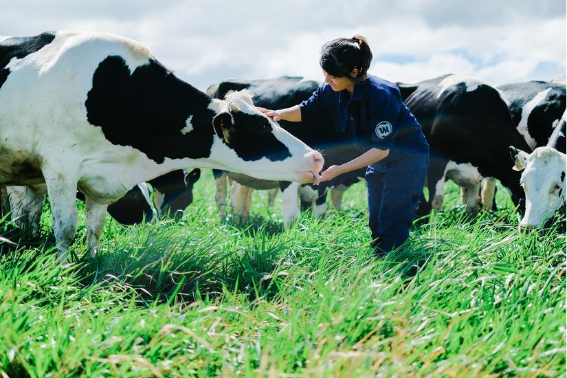 [Vinamilk có hệ thống trang trại đạt chuẩn Global G.A.P lớn nhất Châu Á]
