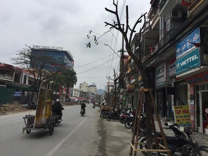 Quảng Ninh: Di chuyển hàng cây được trồng dưới lòng đường đi nơi khác