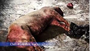 Hành vi giết mổ lợn chết không rõ nguyên nhân bị xử lý như nào?