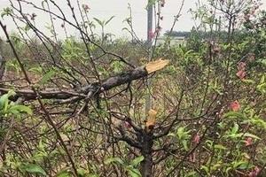 Bắc Ninh: Điều tra nguyên nhân chủ vườn đào tử vong bất thường