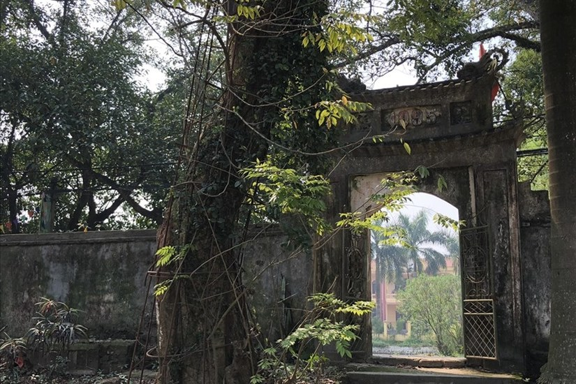 Cây sưa trăm tỉ ở Hà Nội sắp được chặt để dân làng yên tâm ăn Tết