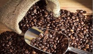 Giá cà phê hôm nay 27/1: Chốt giá tuần ở mức 33.700 đồng/kg