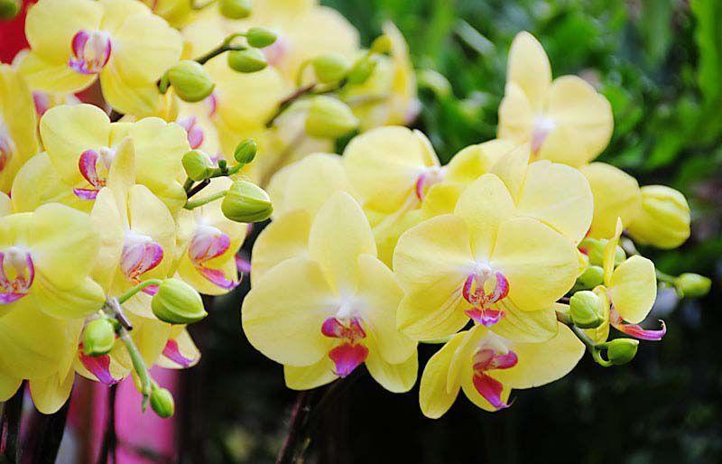Những loài hoa hút may mắn và tài lộc nên chưng vào dịp Tết