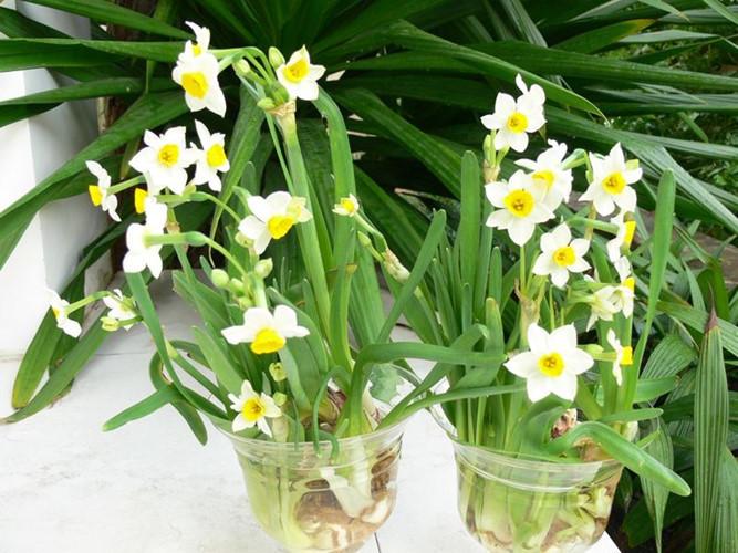 Những loài hoa hút may mắn và tài lộc nên chưng vào dịp Tết2