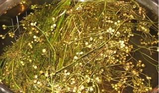 Tác dụng tuyệt vời của hạt mùi với sức khoẻ trong ngày Tết