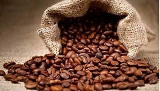 Giá cà phê hôm nay 31/1: Quay đầu giảm 200 đồng/kg
