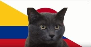 Mèo tiên tri Cass dự đoán đội sẽ vô địch Asian Cup 2019