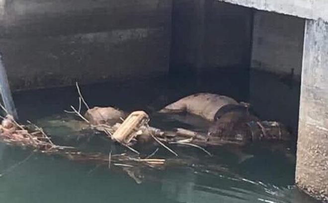 Bình Dương: Phát hiện thi thể nam thanh niên 20 tuổi không mặc áo đang phân hủy trôi trên kênh