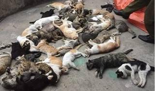Nam Định: Hàng loạt con mèo bỗng lăn đùng ra chết