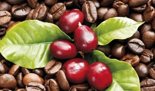 Giá cà phê hôm nay 14/2: Tiếp tục xuống giá