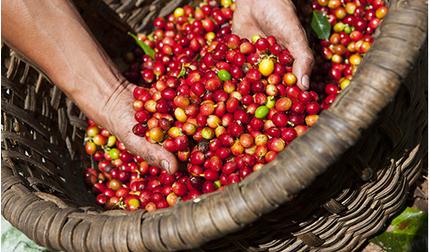 Giá cà phê hôm nay 23/2: Tăng nhẹ vào cuối tuần