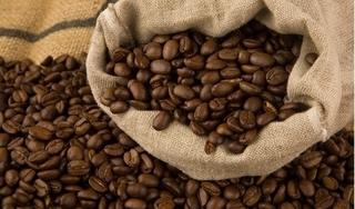 Giá cà phê hôm nay 25/2: Tăng 200 đồng/kg tại tỉnh Gia Lai