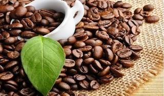Giá cà phê hôm nay 28/2: Tăng phục hồi nhẹ 200 đồng/kg