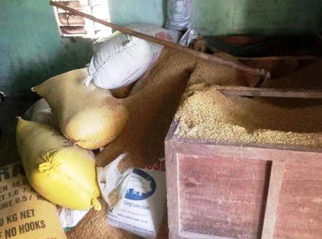 gia chủ bị trộm 'cuỗm' sạch 49 cây vàng dưới đống lúa