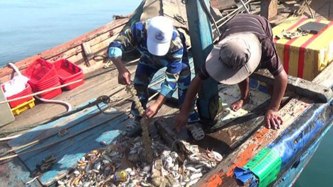 Bình Định xóa bỏ nghề đánh cá tận diệt trong năm 2019
