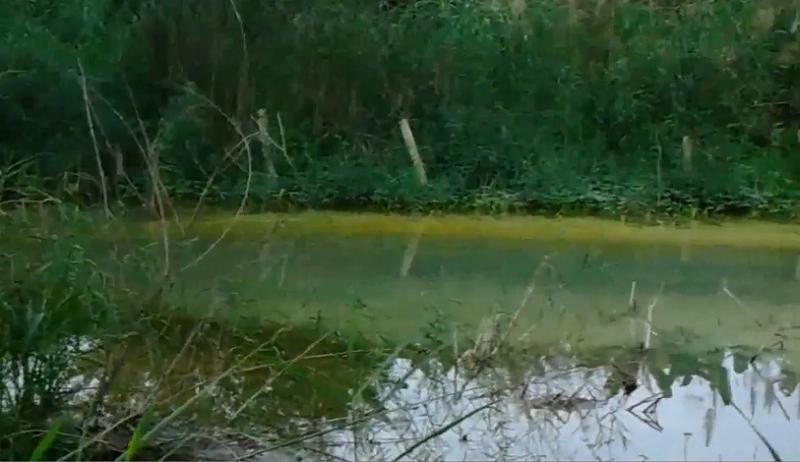 Phú Thọ: Công ty CP Nhôm Sông Hồng xả thài gây ô nhễm, chính quyền ở đâu?2