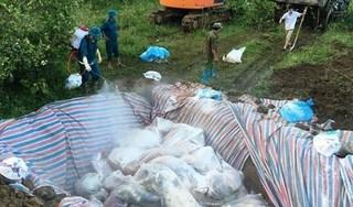 Hà Nam: Tiếp tục tiêu hủy gần 300 con lợn mắc dịch tả châu Phi