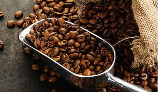 Giá cà phê hôm nay 24/4: Quay đầu giảm giá 200 đồng/kg