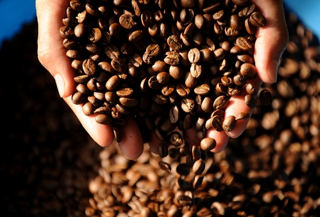 Giá cà phê hôm nay 15/3: Bất ngờ giảm sốc 600 đồng/kg ở nhiều địa phương