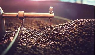 Giá cà phê hôm nay 11/3: Giảm nhẹ, cao nhất 33.600 đồng/kg