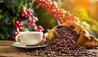 Giá cà phê hôm nay 2/5: Giảm mạnh sau khi tăng nhẹ vào phiên hôm qua