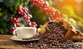 Giá cà phê hôm nay 17/7: Bất ngờ giảm 700 đồng/kg