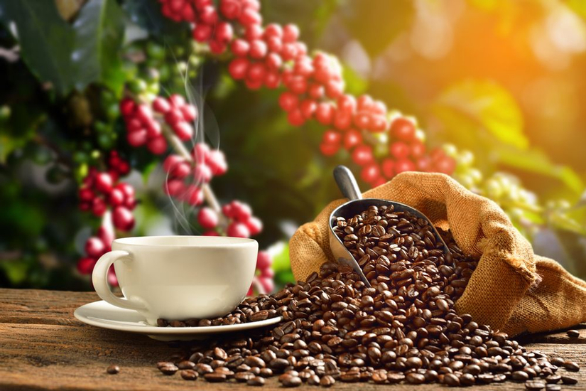 Giá cà phê hôm nay 13/3: Giảm nhẹ 100 đồng/kg, đứng giá ở mức 32.600 – 33.300 đồng/kg