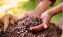 Giá cà phê hôm nay 19/7: Tiếp tục tăng thêm 100 đồng/kg
