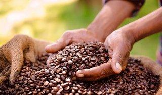 Giá cà phê hôm nay 13/8: Bất ngờ giảm mạnh 400 đồng/kg