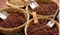 Giá cà phê hôm nay 21/5: Tăng mạnh 700 đồng/kg, dao động ở mức
