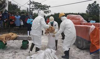 Nam Định phát hiện ổ dịch tả lợn châu Phi đầu tiên
