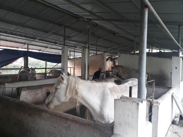 Điểm sáng về nông nghiệp Công nghệ cao ở huyện Thanh Trì, Hà Nội