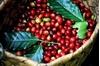 Giá cà phê hôm nay 20/7: Giảm 200 đồng, ở mức 33.100 – 34.100 đồng/kg