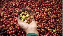 Giá cà phê hôm nay 28/7: Chốt tuần giá cà phê lùi sâu