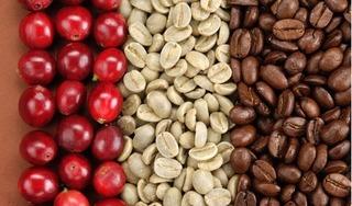 Giá cà phê hôm nay 6/7: Bất ngờ giảm 600 đồng/kg