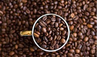 Giá cà phê hôm nay 24/7: Đứng yên sau khi giảm mạnh vào hôm qua