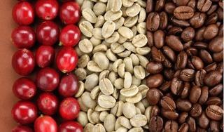 Giá cà phê hôm nay 26/3: Tăng phục hồi 100 đồng/kg
