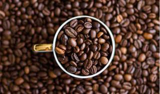 Giá cà phê hôm nay 26/8: Đi ngang ngay đầu tuần mới