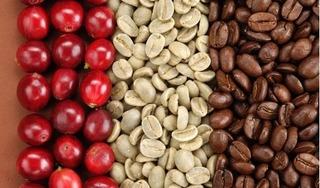 Giá cà phê hôm nay 30/8: Bất ngờ giảm mạnh 500 đồng/kg