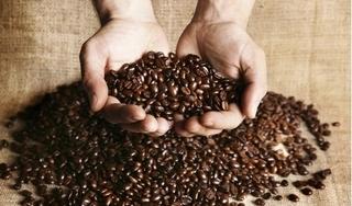 Giá cà phê hôm nay 27/8: Dao động trong khoảng 32.000–33.100 đồng/kg