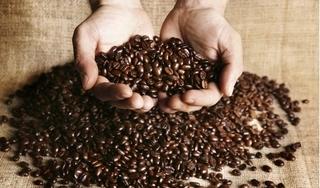 Giá cà phê hôm nay 27/9: Nhích nhẹ trở lại 100 đồng/kg