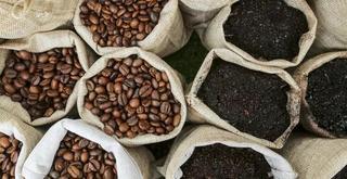 Giá cà phê hôm nay 5/10: Giảm mạnh 400 đồng/kg trong phiên cuối tuần