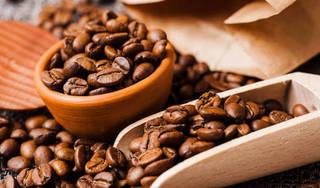 Giá cà phê hôm nay 13/9: Giảm nhẹ 100 đồng/kg