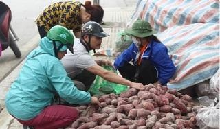 """Người Hà Nội chung tay """"giải cứu"""" hàng chục tấn khoai lang cho bà con Gia Lai"""