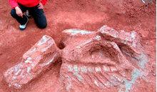 Phát hiện hàng loạt hóa thạch xương khủng long tại Chile
