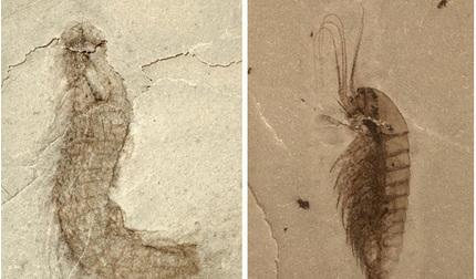 Phát hiện hàng chục ngàn hóa thạch 500 triệu năm tuổi tại Trung Quốc