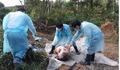 Vì sao Bộ Y tế 'phớt' cuộc họp BCĐ Phòng, chống dịch tả lợn châu Phi?