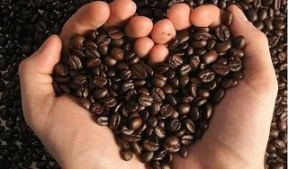 Giá cà phê hôm nay 13/10: Giữ nguyên sau mốc giảm ngày hôm qua