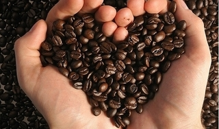 Giá cà phê hôm nay 13/5: Đi ngang đầu tuần mới