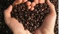Giá cà phê hôm nay 11/4: Tăng nhẹ trở lại 100 đồng/kg